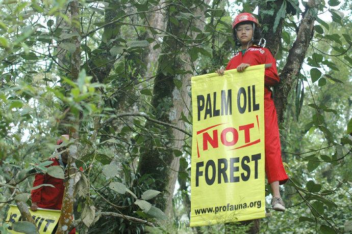 olio_palma_foreste