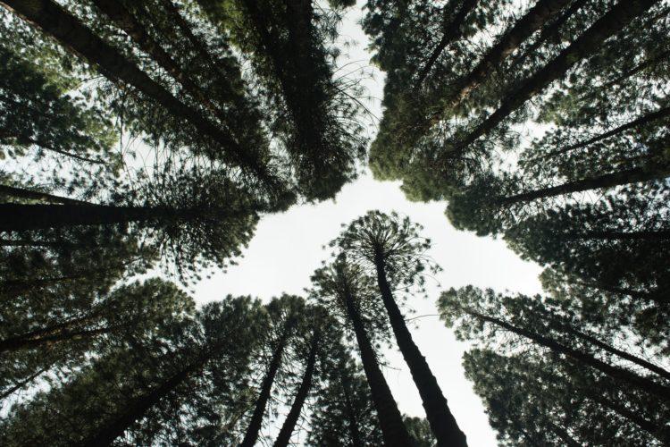 comunicare la transizione ecologica
