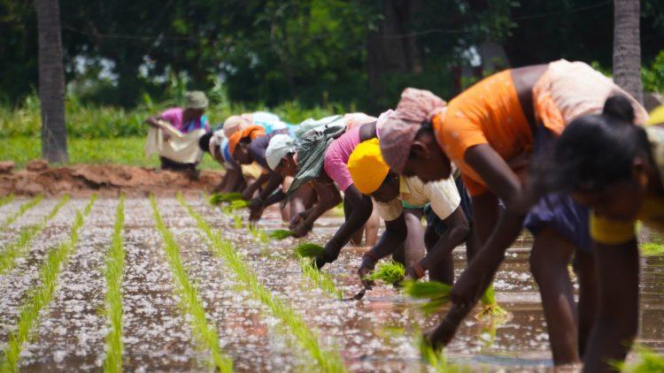 I contadini indiani stanno conducendo una storica