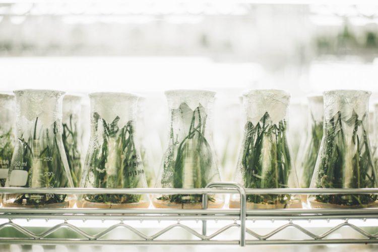 A quando un nuovo patto tra scienza e società?